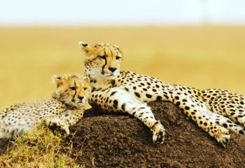 Budget Tours Archives | Best Safaris | We Know Africa Best